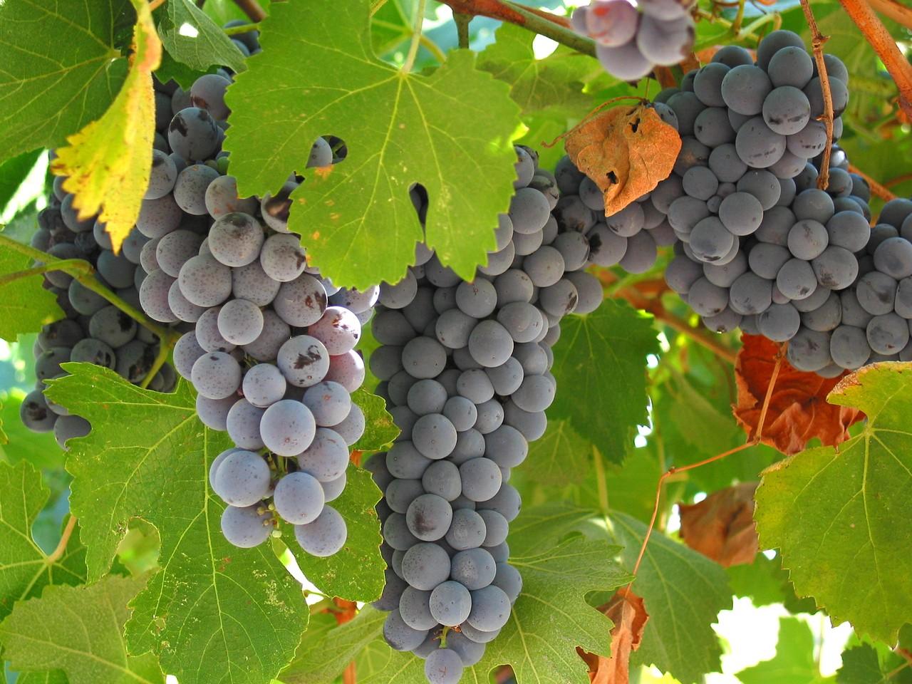 Kolekcjonowanie win